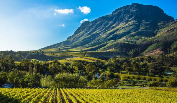 Cape Winelands on Forbes' 'bucket list' of global wine destination